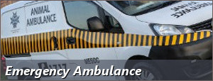 Emergency Ambulance vehicle