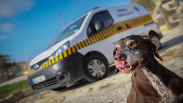 Animal ambulance in the background with dog in the foreground