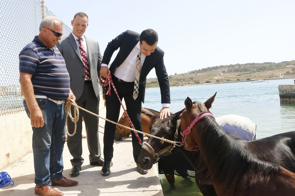 first horse swimming zone launched