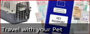 Picture of a blue pet passport and a carrier cage for a dog or cat