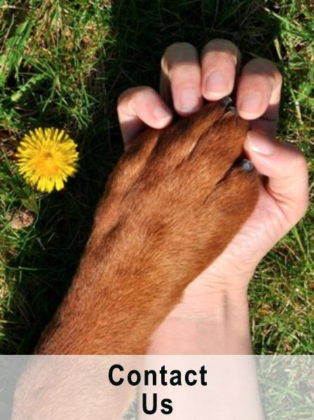 dog's paw in human hand