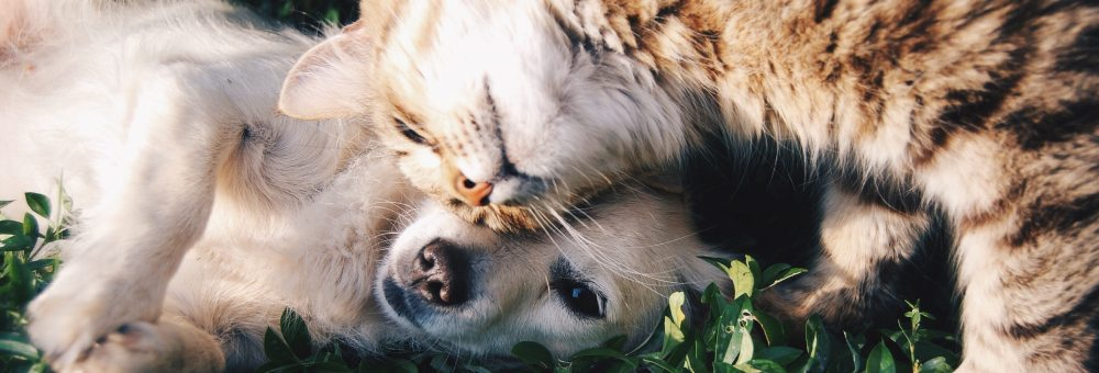 cat cuddling with a dog